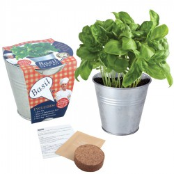 Herb Potting Set - Basil