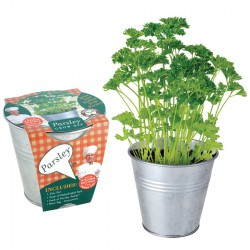 Herb Potting Set - Chives