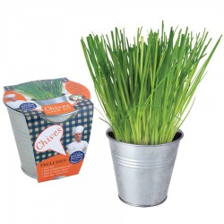 Herb Potting Set - Parsley
